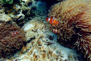 Diving in Perhentian