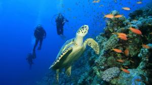 Perhentian diving tour