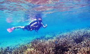 tenggol coral