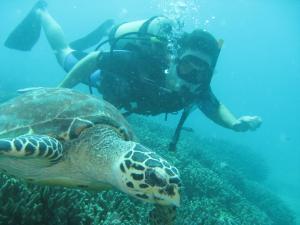 Tioman Island scuba diving