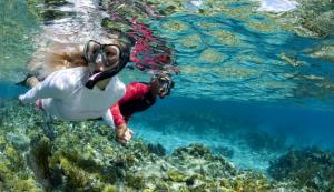 Tioman Snorkeling Tour