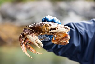 activities-fishing-and-crabbing