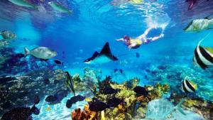 lang tengah d coconut resort snorkeling tour