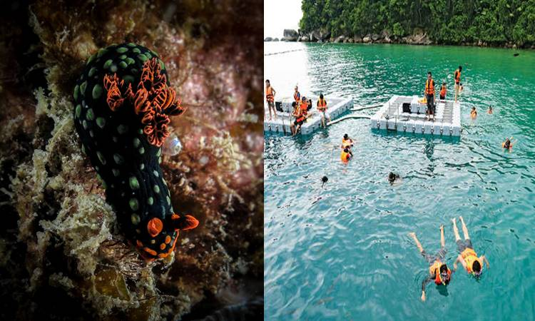 Dive and explore exotic underwater sea creatures or go snorkelling in the calm waters of Tekek